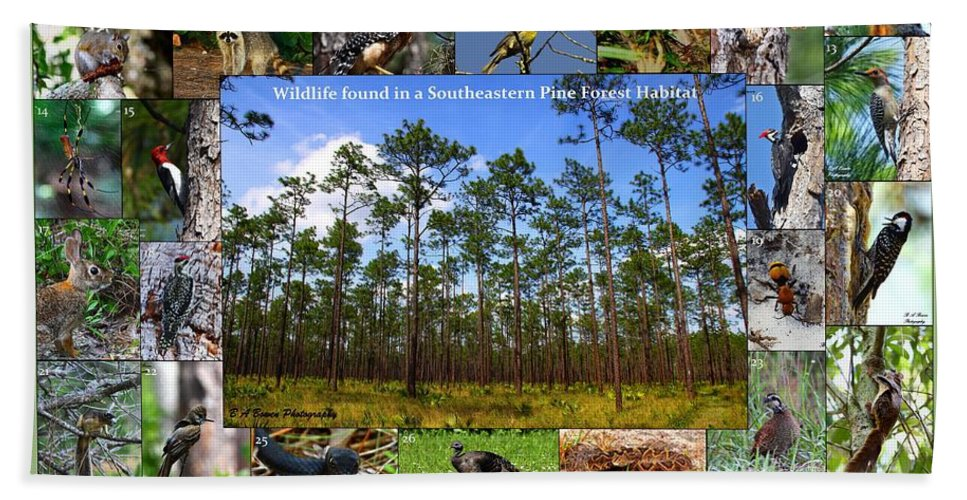 Pine Forest Bath Towel featuring the photograph Southeastern Pine Forest Wildlife Poster by Barbara Bowen