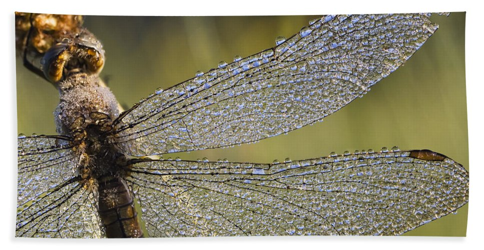 Mp Hand Towel featuring the photograph Southern Skimmer Orthetrum Brunneum by Konrad Wothe