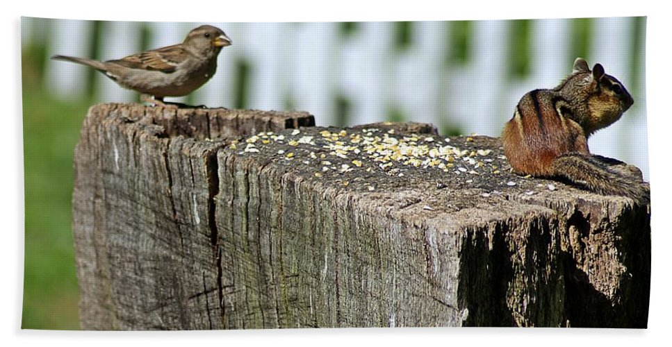 Sparrow Bath Sheet featuring the photograph Sparrow And Chipmunk Coexist by Joe Faherty