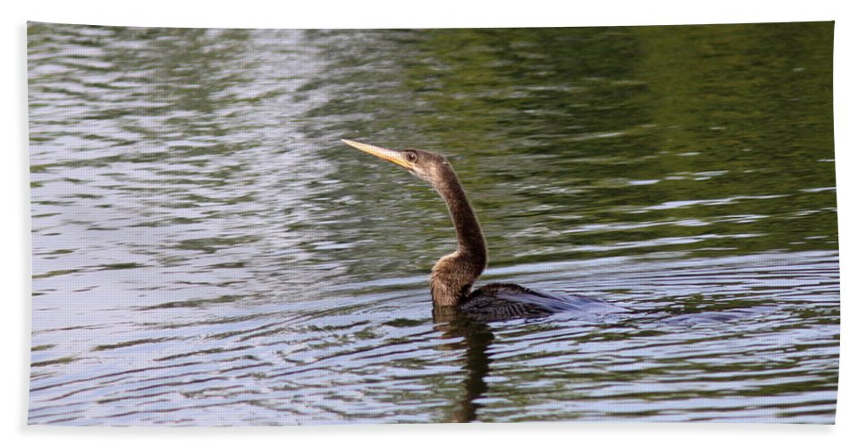 Anhinga Bath Sheet featuring the photograph Spear by Travis Truelove
