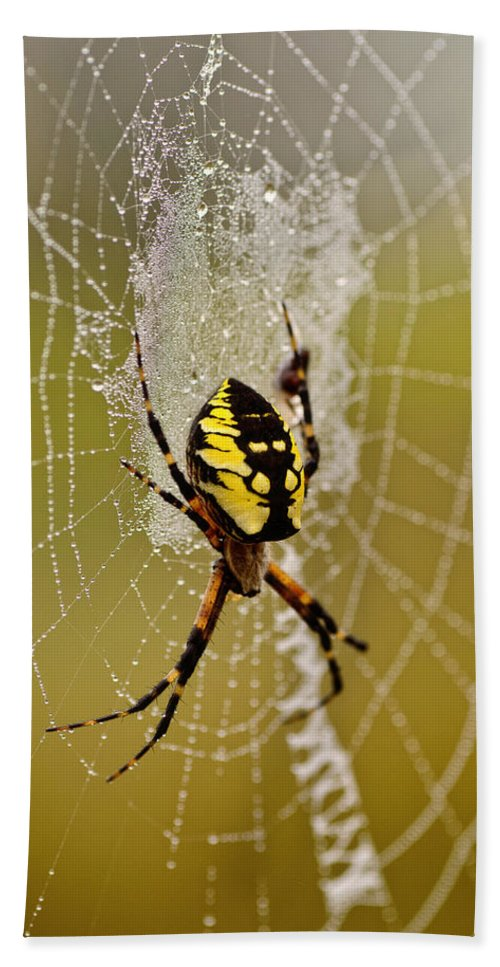 Spider Bath Sheet featuring the photograph Spider Power by Susan Capuano