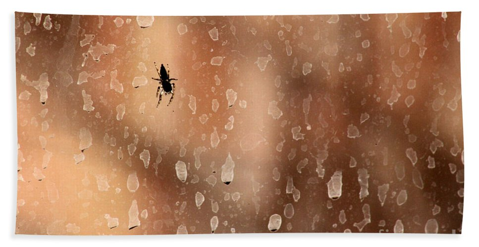Spider Bath Sheet featuring the photograph Spider Spots by Alycia Christine