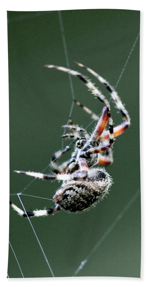 Spider Bath Sheet featuring the photograph Spider - The Spinner by Travis Truelove