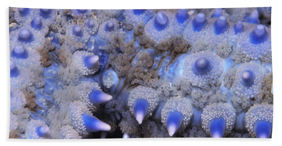 Fn Hand Towel featuring the photograph Spiny Starfish Marthasterias Glacialis by Hans Leijnse
