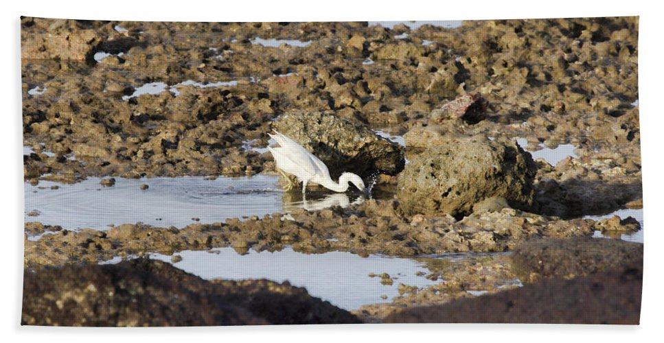 Eastern Reef Egret- Bath Sheet featuring the photograph Splash Pool by Douglas Barnard