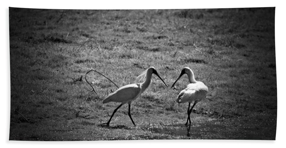 Spoonbills Hand Towel featuring the photograph Spoonbills by Douglas Barnard