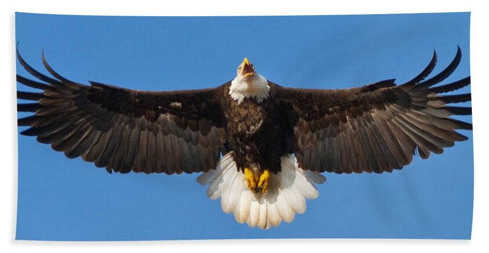 Eagle Spread Eight Feet Hand Towel featuring the photograph Spread Eagle by Randall Branham