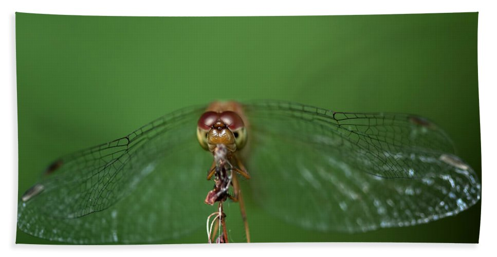 Dragonfly Hand Towel featuring the photograph Spread Your Wings And Fly Away by Evelina Kremsdorf