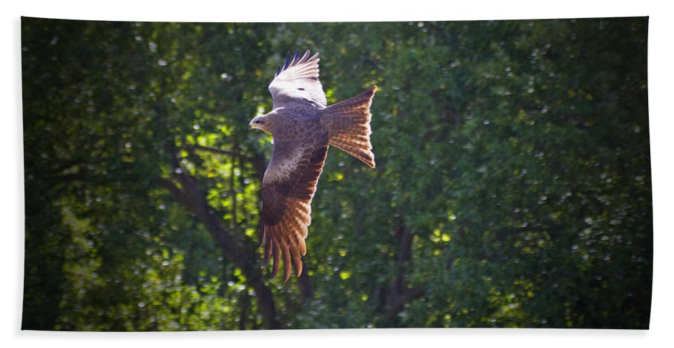 Whistling Kite Hand Towel featuring the photograph Spreading My Wings by Douglas Barnard