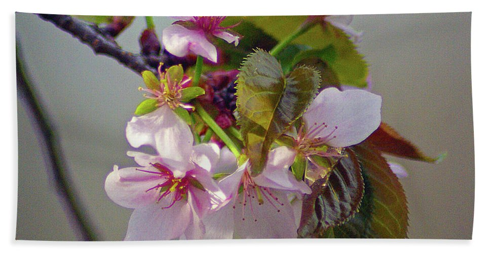 2d Bath Sheet featuring the photograph Spring Blossoms by Brian Wallace