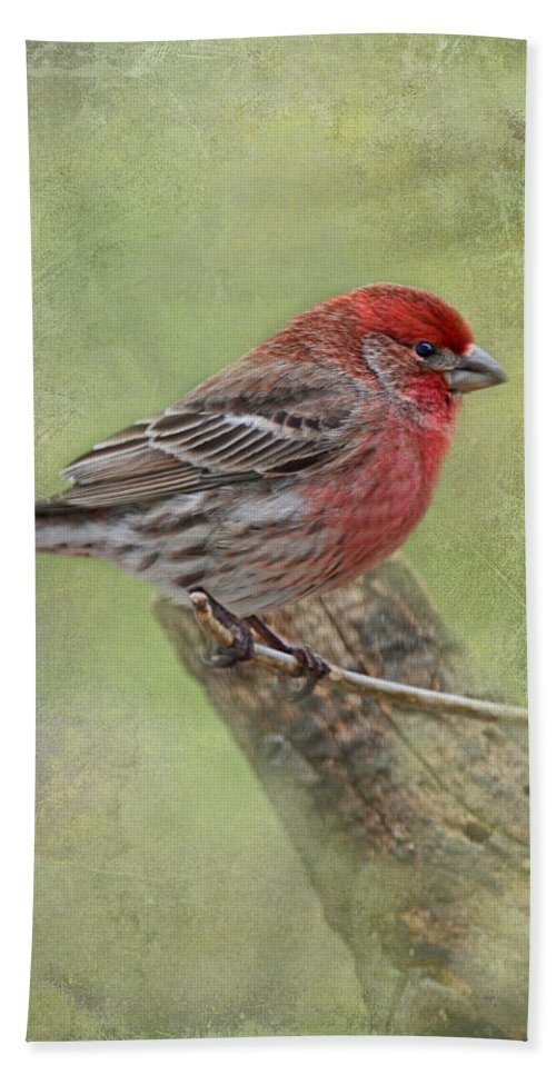 Animals Bath Sheet featuring the photograph Spring Finch by Debbie Portwood
