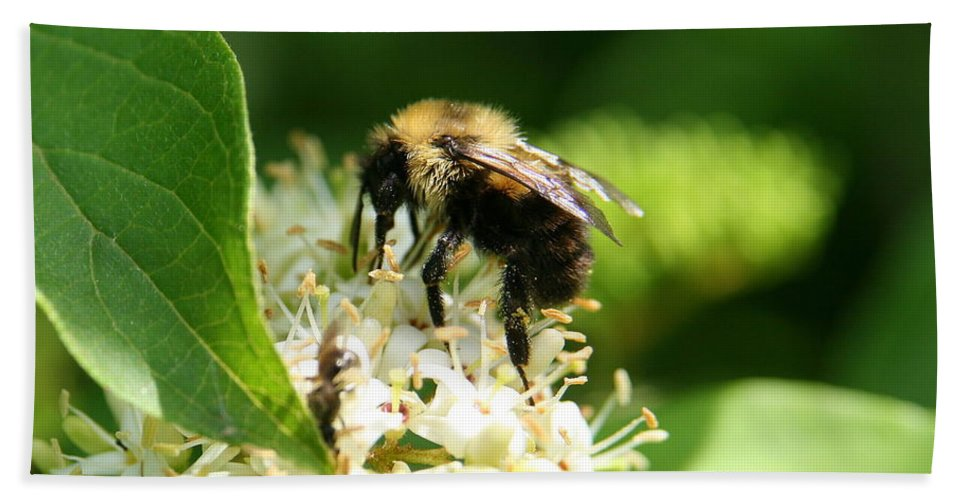 Bee Hand Towel featuring the photograph Spring Pollination by Neal Eslinger