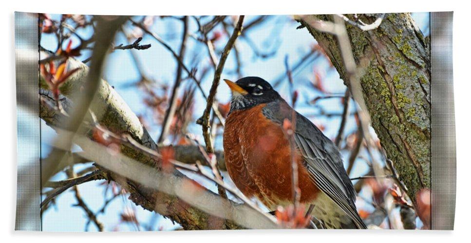 Nature Bath Sheet featuring the photograph Spring Robin by Debbie Portwood
