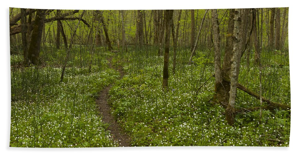 Spring Hand Towel featuring the photograph Spring Trail Scene 5 A by John Brueske