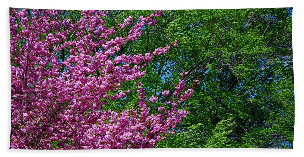 Seasons Bath Sheet featuring the photograph Springtime by Lisa Phillips
