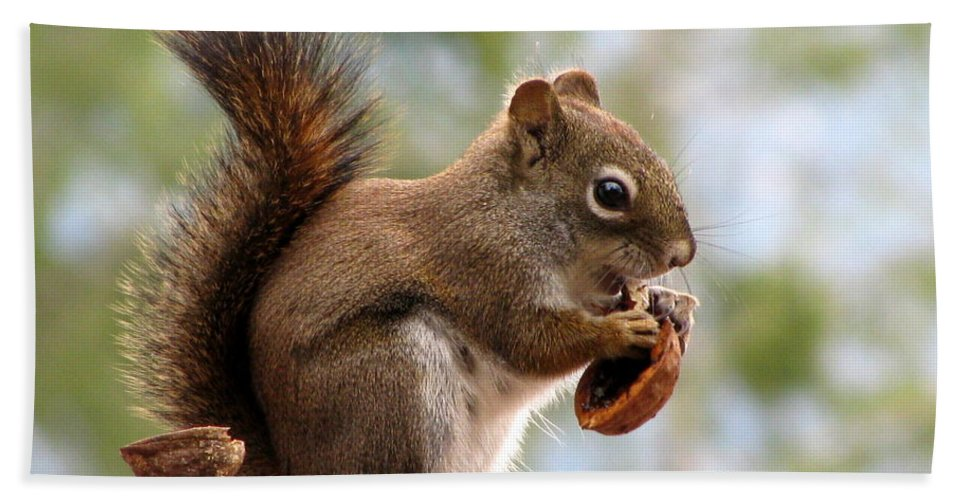 Squirrel Hand Towel featuring the photograph Squirrel And His Walnut by Leone Lund
