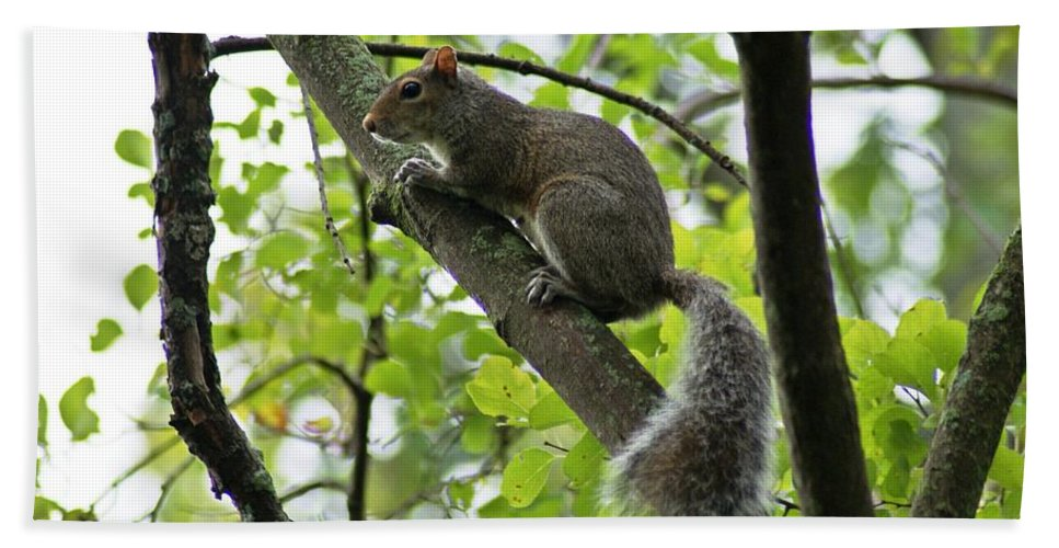 Squirrel Bath Sheet featuring the photograph Squirrel I by Joe Faherty