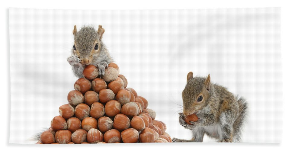 Nature Hand Towel featuring the photograph Squirrels And Nut Pyramid by Mark Taylor
