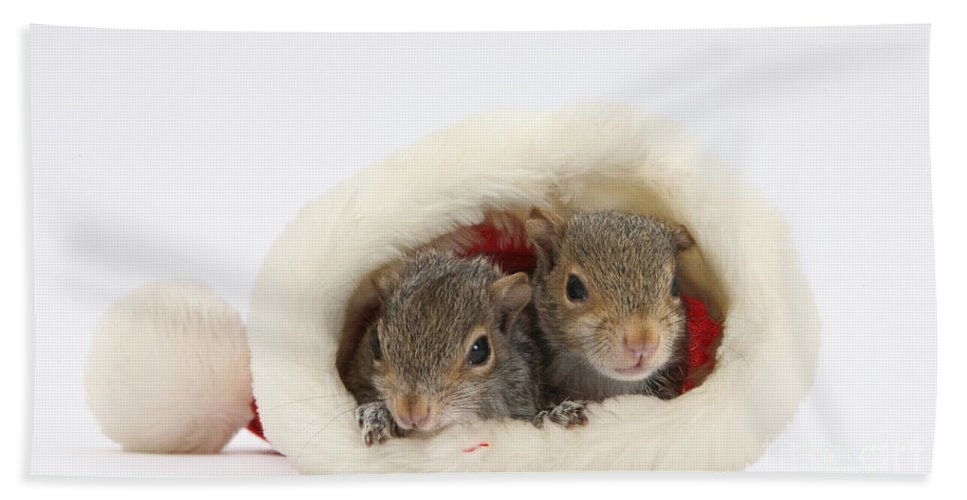 Nature Hand Towel featuring the photograph Squirrels In Santa Hat by Mark Taylor