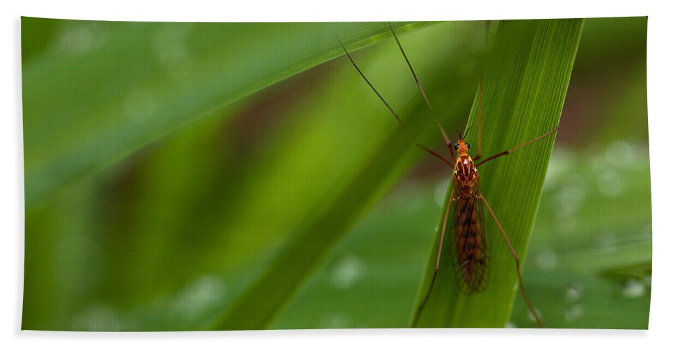 Insect Bath Towel featuring the photograph Squito Has Landed by Karol Livote