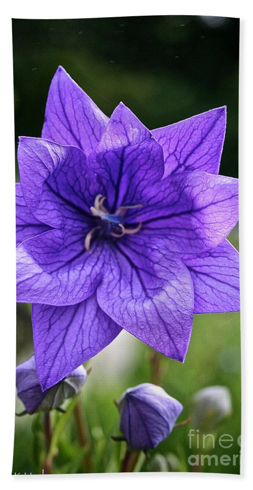 Floral Hand Towel featuring the photograph Star Balloon Flower by Susan Herber