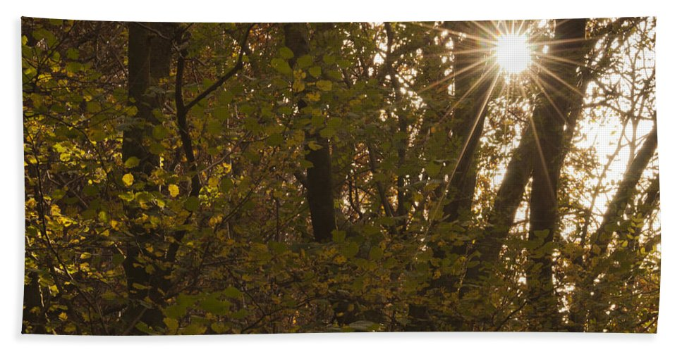 Starburst Hand Towel featuring the photograph Starburst Trees by Steve Purnell