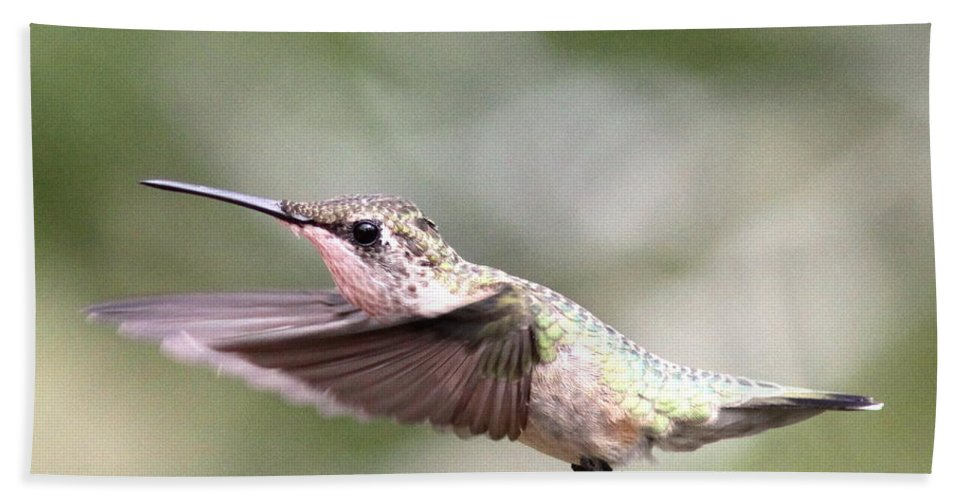 Hummingbird Bath Sheet featuring the photograph Stay Low by Travis Truelove
