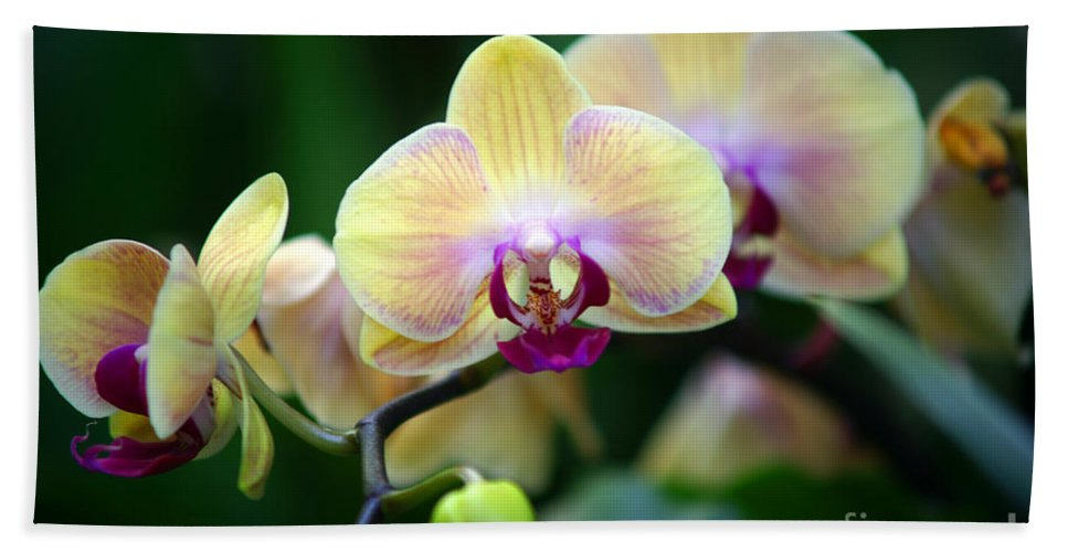 Flowers Bath Sheet featuring the photograph Stem Of Orchids by Randy Harris