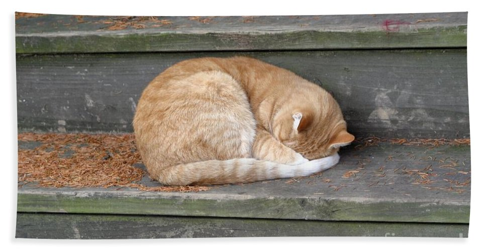 Cat Bath Sheet featuring the photograph Step Sleeper by Living Color Photography Lorraine Lynch
