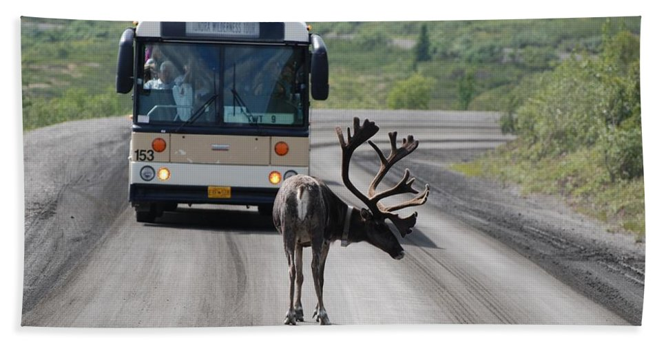 Caribou Bath Sheet featuring the photograph Stopping Traffic by Eric Tressler
