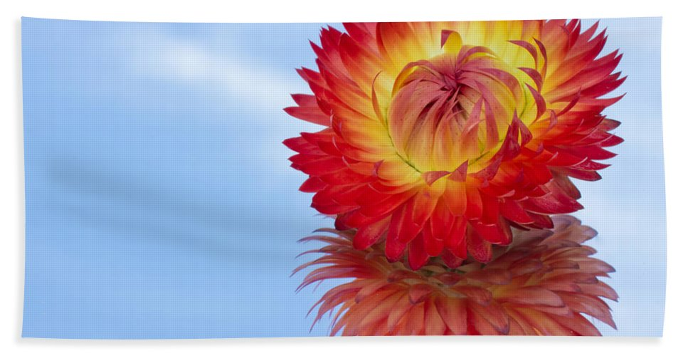 Abstract Hand Towel featuring the photograph Strawflower Reflection by Heidi Smith