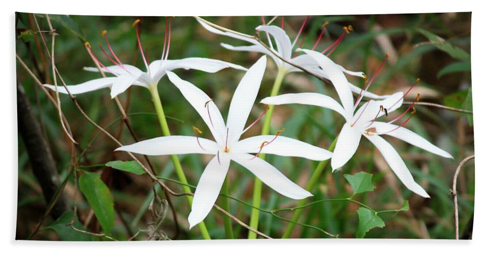 String Lily Bath Sheet featuring the photograph String Lily by Carol Groenen
