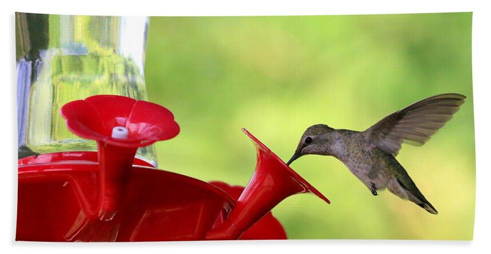 Hummingbird Bath Sheet featuring the photograph Summer Friend by Carol Groenen