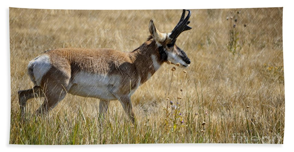 Pronghorn Hand Towel featuring the photograph Summer Pronghorn Rain by Donna Greene