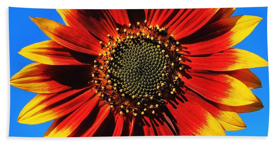 Sunflower Hand Towel featuring the photograph Summerflower by Benjamin Yeager