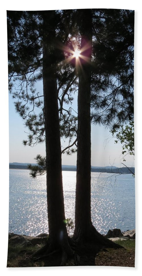 Trees Hand Towel featuring the photograph Sun Shining Through Trees by Kimberly Castor