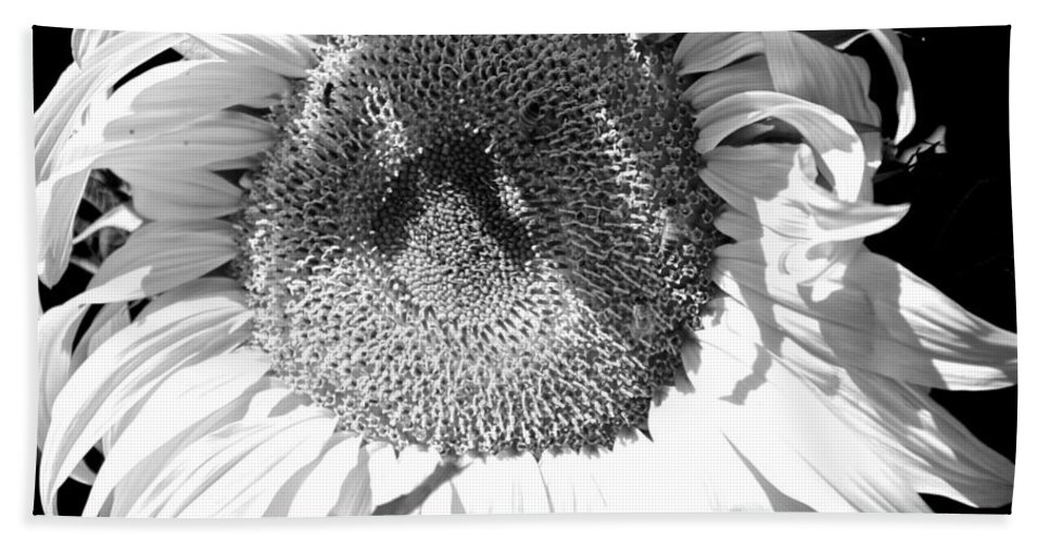 Sunflower Hand Towel featuring the photograph Sunflower Closeup by Eric Tressler