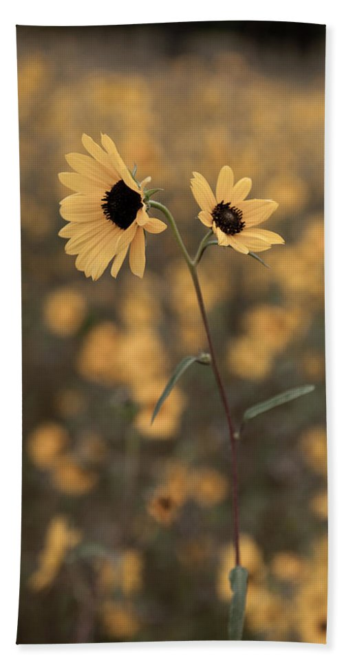 Sunflower Hand Towel featuring the photograph Sunflower In The Wild by Scott Sawyer