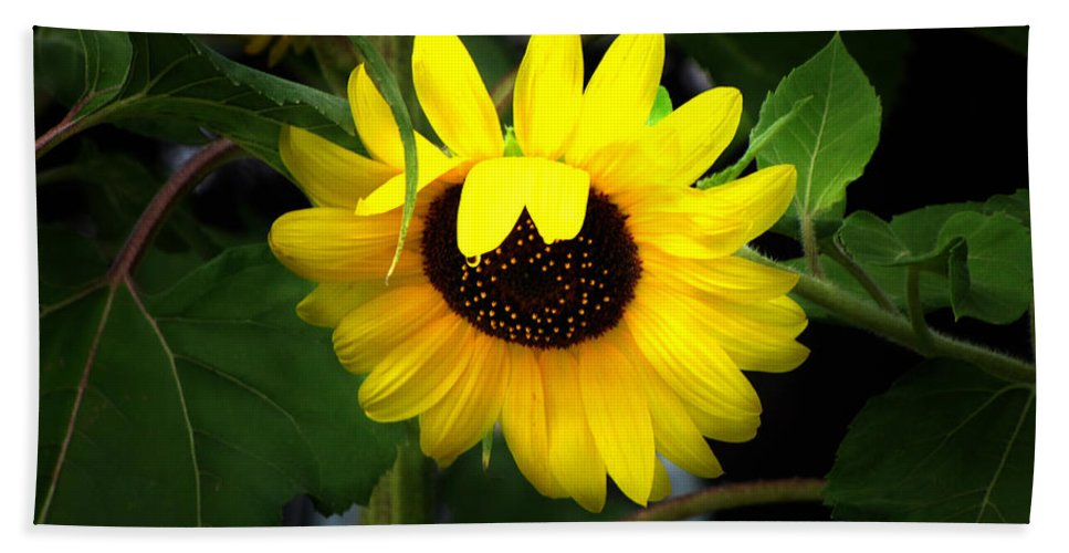 Sunflower Hand Towel featuring the photograph Sunflower One by Ms Judi