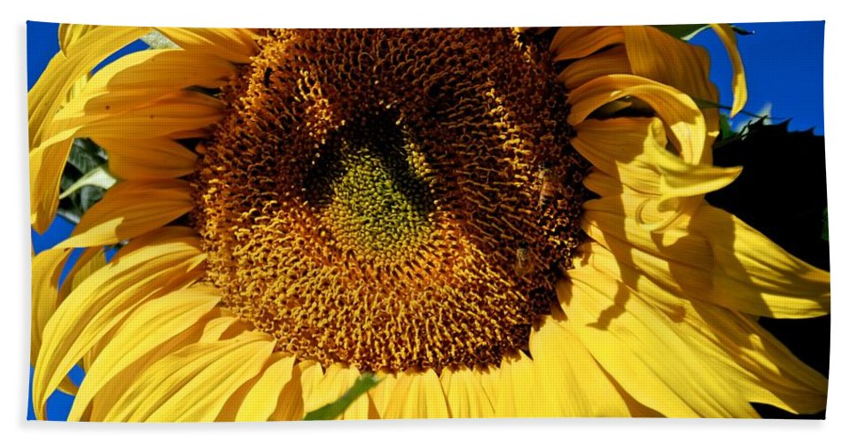 Sunflower Hand Towel featuring the photograph Sunflower Up Close by Eric Tressler