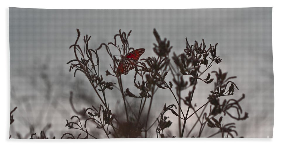 Butterfly Bath Sheet featuring the photograph Sunken Treasure by Kim Henderson