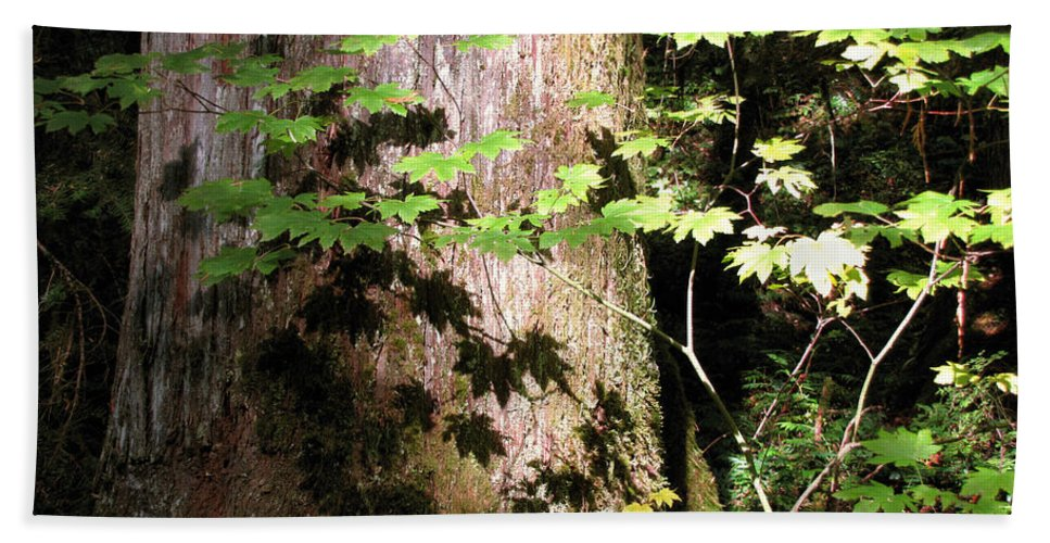 Sunlight Hand Towel featuring the photograph Sunlight Reaching The Forest Floor by Katie Wing Vigil