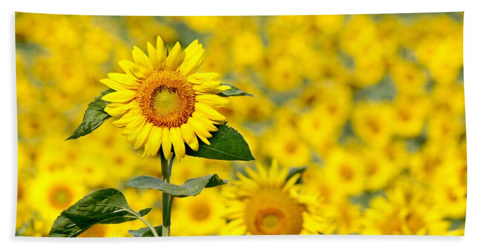 Wildflower Hand Towel featuring the photograph Sunny Disposition by Bill Pevlor