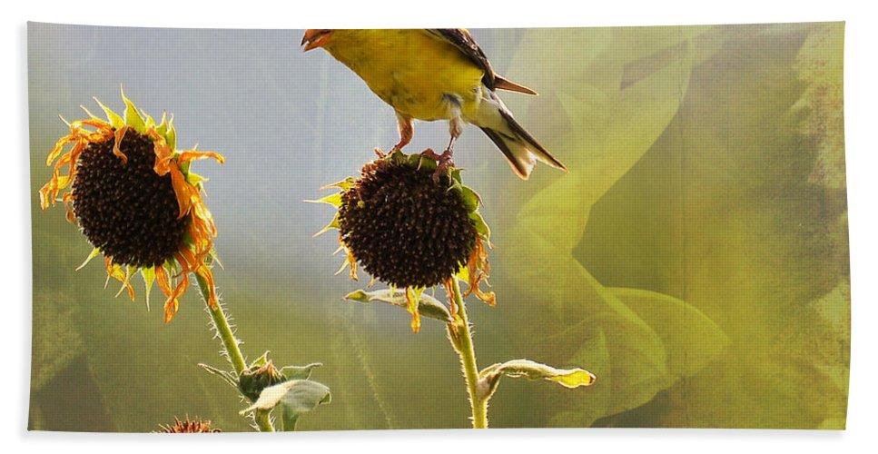 Bird Bath Sheet featuring the photograph Sunny Finch by Todd Hostetter