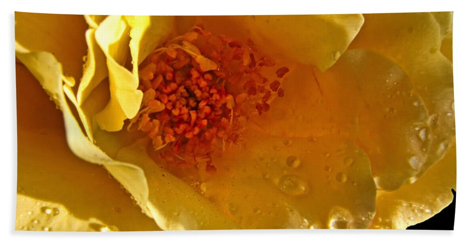 Botanical Bath Sheet featuring the photograph Sun Rays On The Yellow Petals by Debbie Portwood