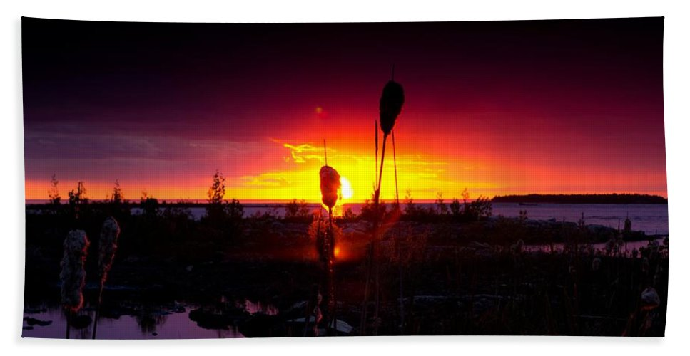 Cat Tail Bath Sheet featuring the photograph Sunset Cat Tail by Cale Best