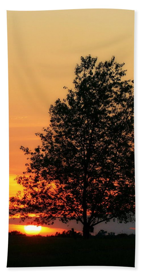 Biophilic Hand Towel featuring the photograph Square Photograph Of A Fiery Orange Sunset And Tree Silhouette by Angela Rath