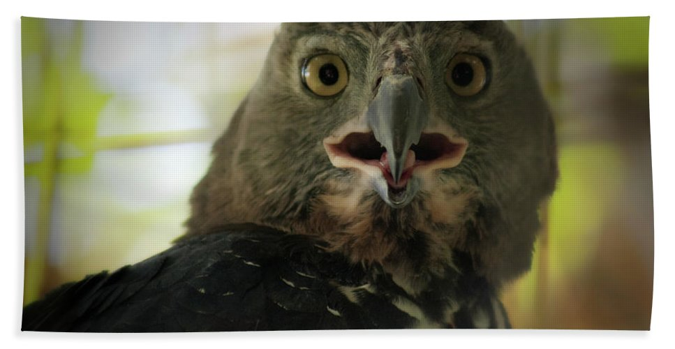 Eagle Hand Towel featuring the photograph Surprized by Douglas Barnard