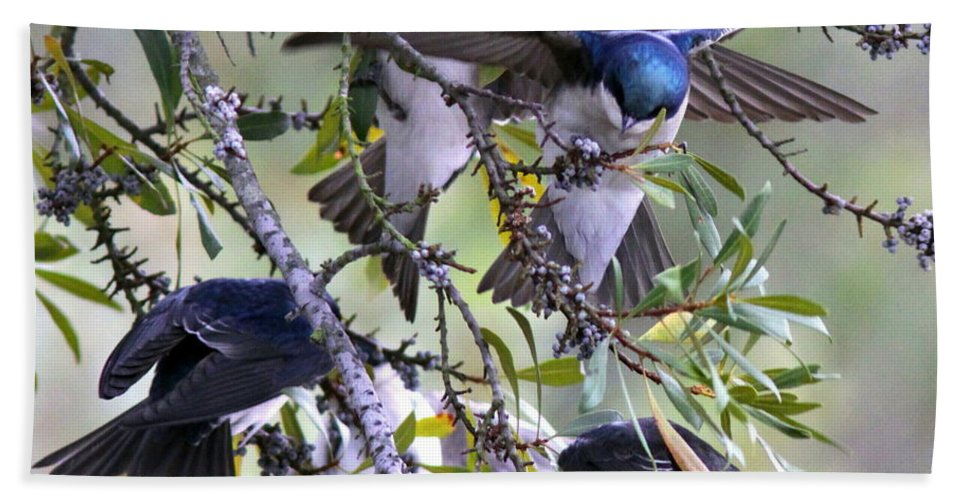 Tree Swallows Bath Sheet featuring the photograph Swallows In Pooler by Travis Truelove