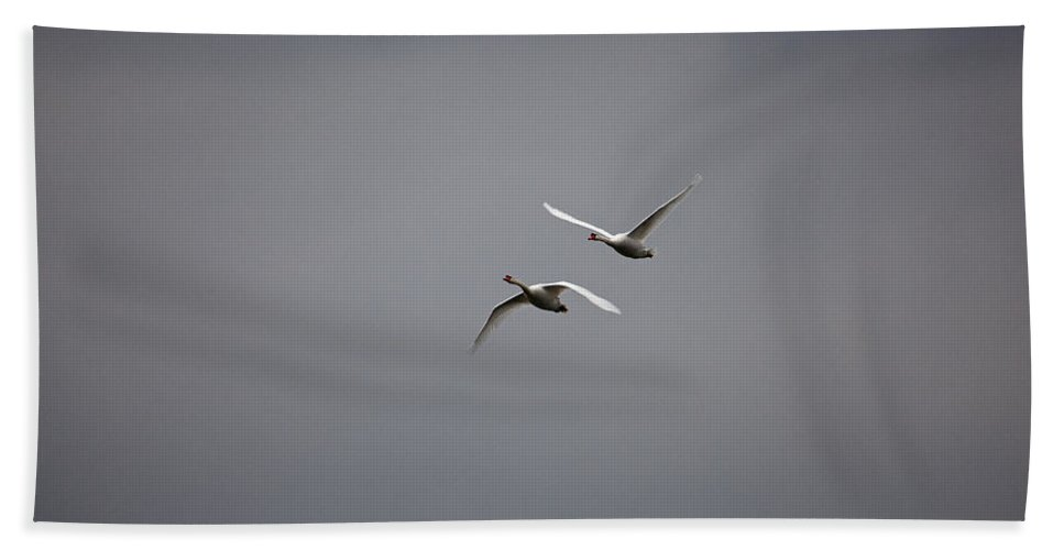 Swan Bath Sheet featuring the photograph Swan Duo by Karol Livote